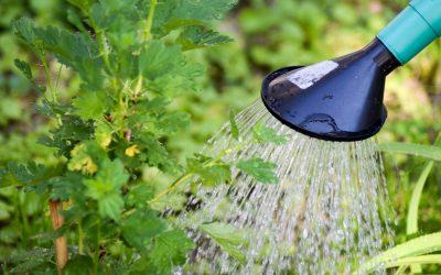 Pflanzen giessen in der Sommerhitze – wichtige Tipps